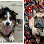 Portretfotografie honden